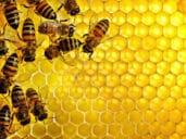 Terapia včelami